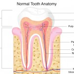 Tooth Trauma and Nerve Damage to Teeth
