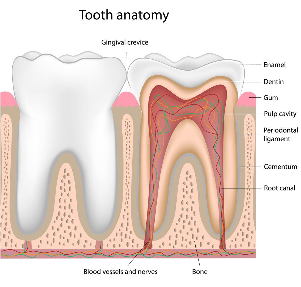 Gallery - Southlake Endodontics